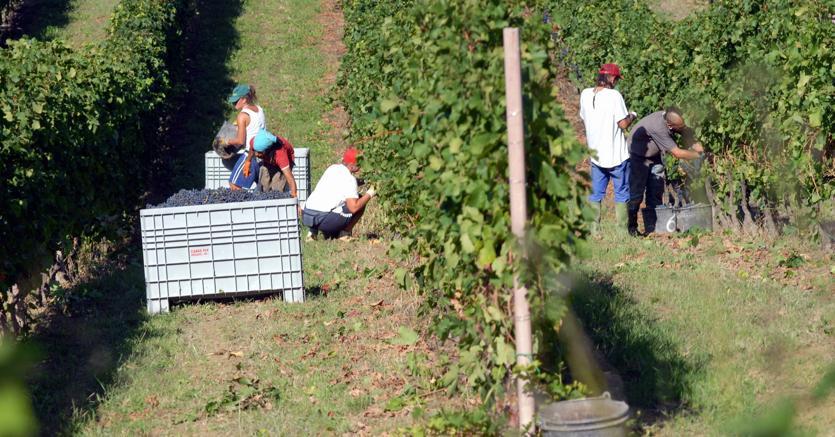 agricoltura-raccolta-fotogramma